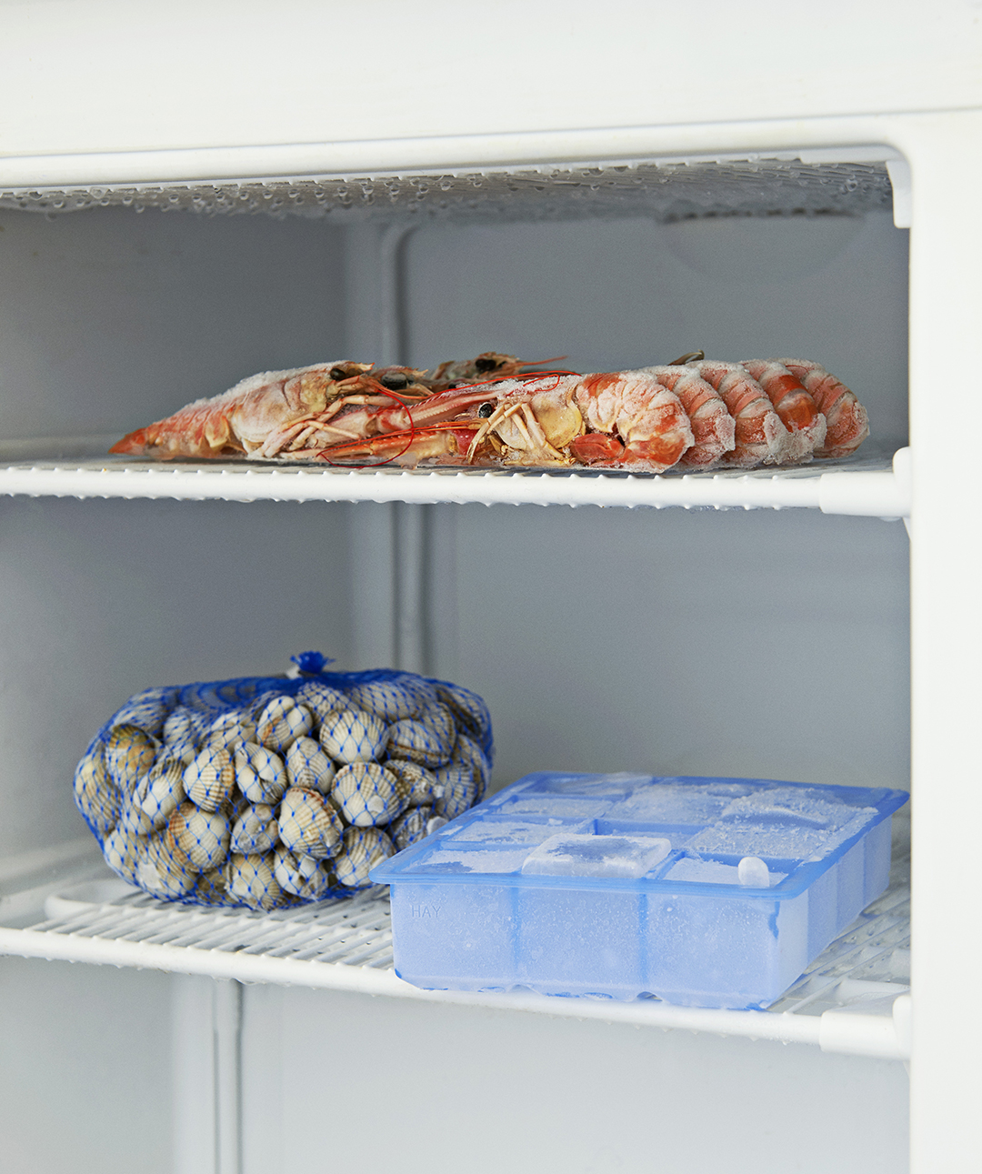 Ice Cube Tray in freezer